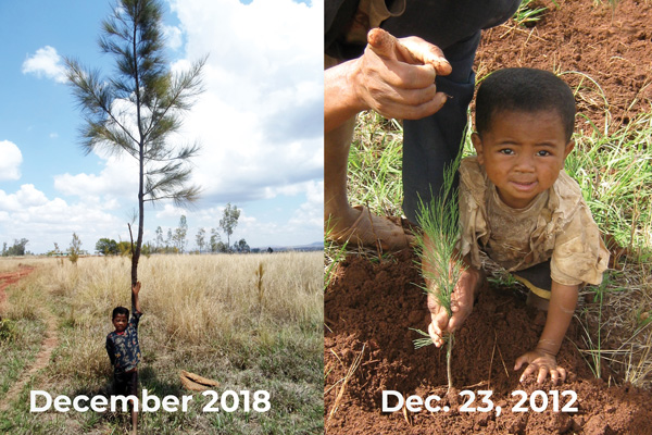 Reforestation by zahana from 2013 to 2018
