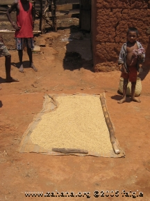 Drying rice on a mat on the ground in the sun before pounding it.