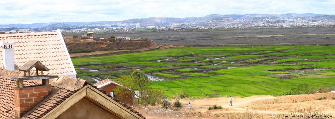 rice paddy in Antananarivo the capital of madagascar