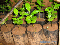 Zahana growing its own seedlings for reforestation in Madagascar